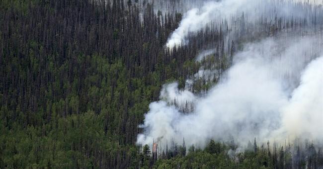 Colorado's 834 million dead trees threaten to worsen fires