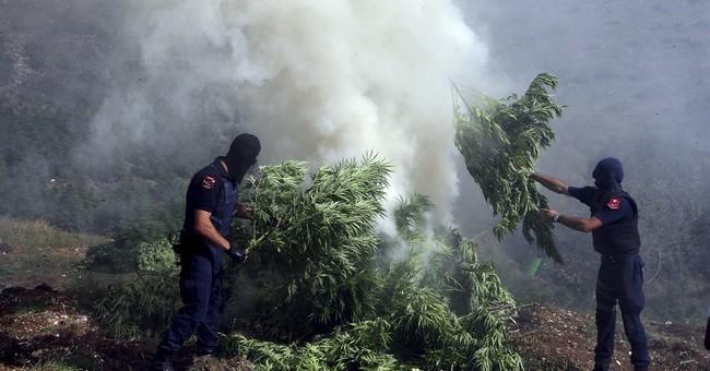 Albanian police find ton of marijuana hidden under house
