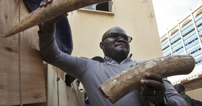 Uganda seizes ton of ivory, arrests 2 West African suspects