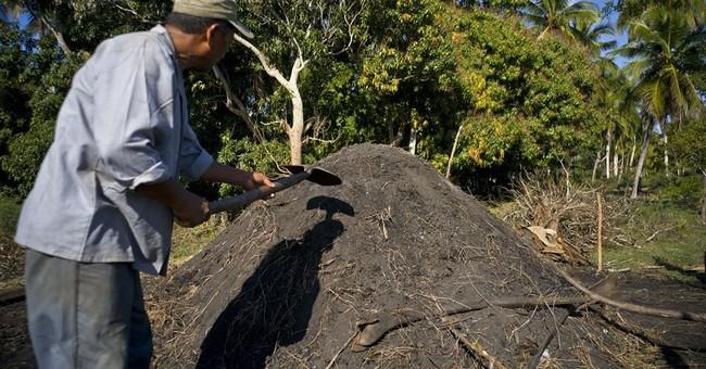 Artisanal marabu charcoal to become 1st Cuban export to US