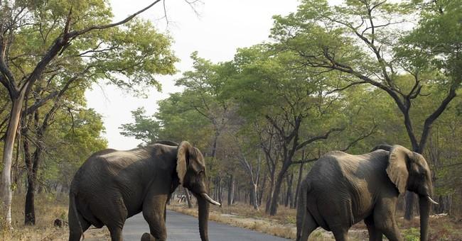 Seeking cash, Zimbabwe sells 35 elephants to China