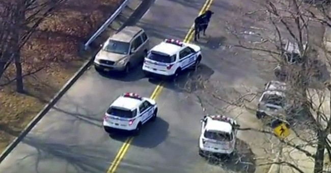 Bull that led police chase after slaughterhouse escape dies