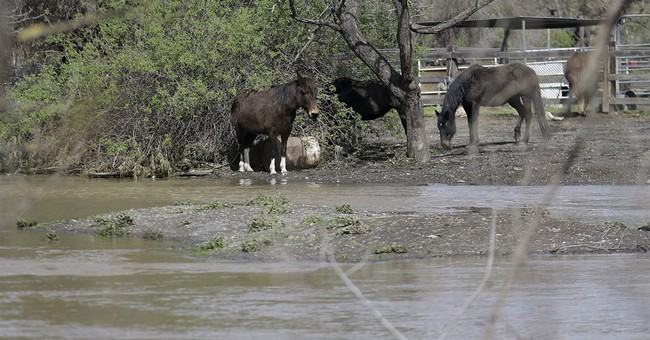 The Latest: Most California flood victims allowed home