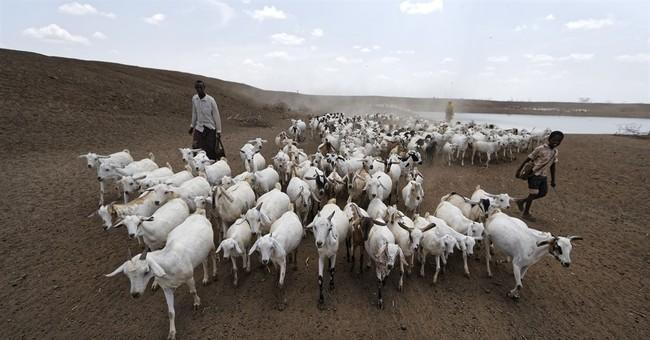 Desperate herders lose animals, hope amid drought in Kenya