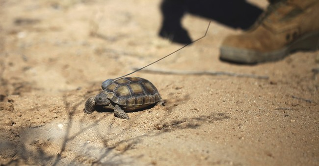 Federal authorities approve California tortoise removal