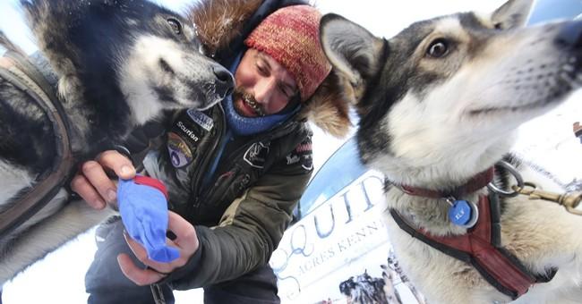 Howls, high-fives mark start of Iditarod race across Alaska