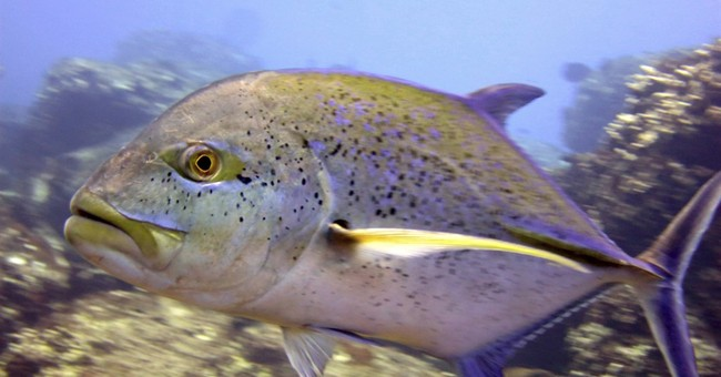US: 11 of 27 reef fish species in Hawaii are overfished
