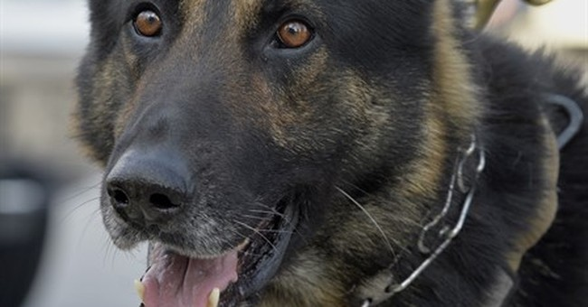 Shoot a police dog? In Kentucky, you might not go to jail