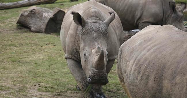 Rhinoceros shot, killed for horn at French wildlife park