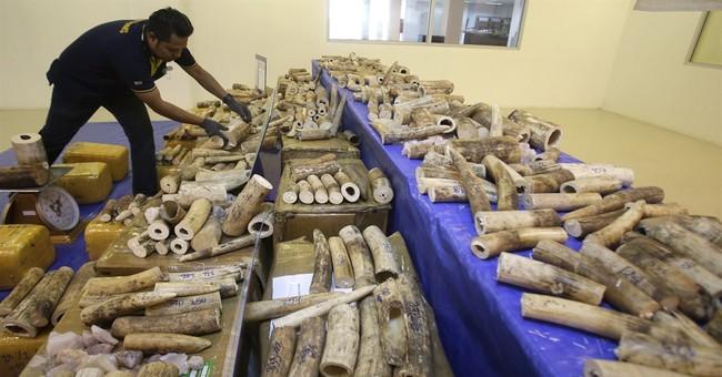 Thailand seizes 422 pieces of smuggled elephant tusks