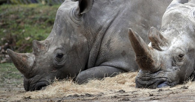 Attack on rhinoceros in Paris puts zoo security in spotlight