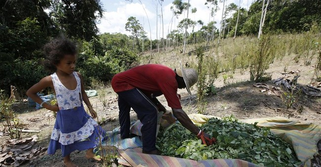 US says Colombia's coca production surges to record levels