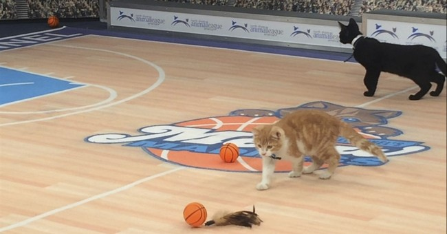 Meow Madness: The Purrfect mix of kittens and basketball