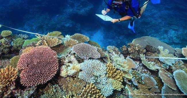 Study: Stopping global warming only way to save coral reefs