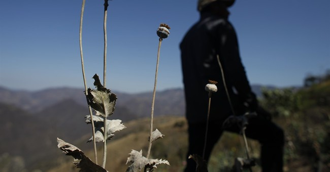 Mexican cartels moving drug crops into Oaxaca state