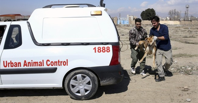Canine shelter takes on Tehran stray dog problem _ humanely