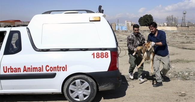Canine shelter takes on Tehran stray dog problem _ humanely