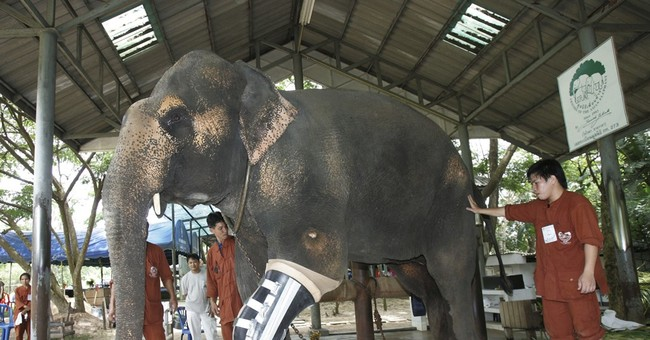 Thai elephant hospital, short of money, at risk of closing