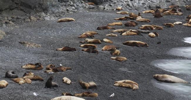 Alaska sea lion study gets help from crowdsource volunteers
