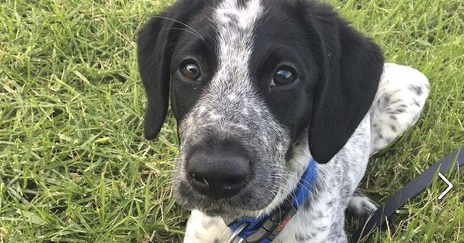 New Zealand police fatally shoot airport security dog