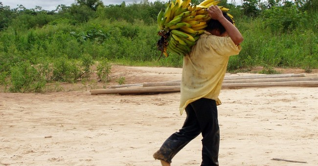 Indigenous Bolivians have some of the healthiest hearts