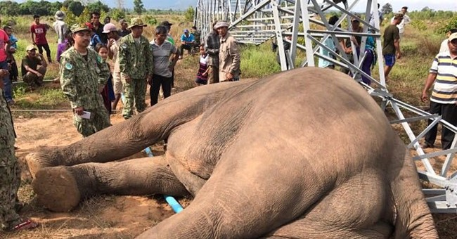 Endangered elephant in Cambodia electrocuted by power pole