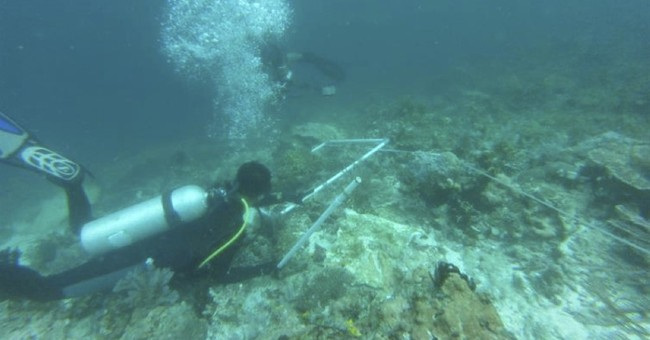 Indonesia survey shows massive coral death from cruise ship