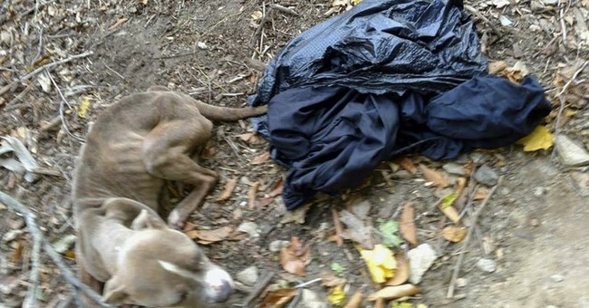Policeman charged; his dog found in trash bag dumped in park