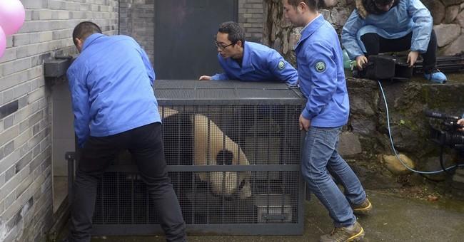 US-born panda Bao Bao makes first public appearance in China