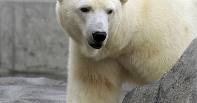 Polar bear plan doesn't seek direct action on climate change