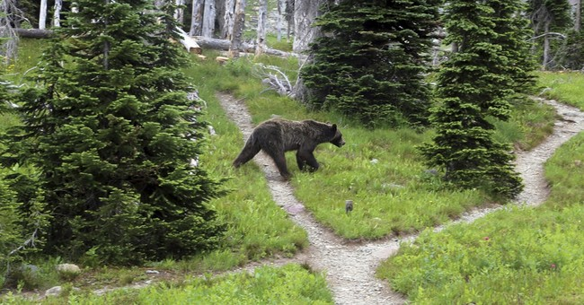 Scientists predict expansion of US grizzly bear habitat