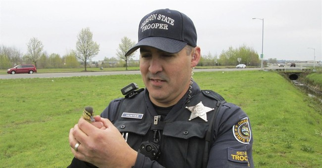 Oregon State Police help rescue 2 ducklings from storm drain