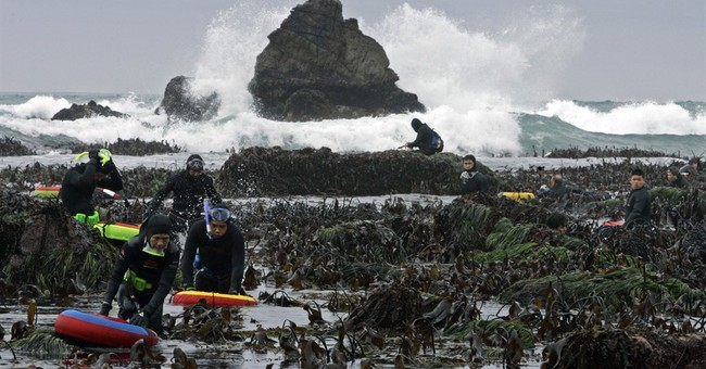 California cuts abalone catch, eliminates 2 diving months