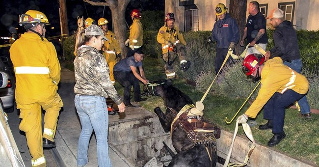 Whoa: Horse rescued after falling into hole in California