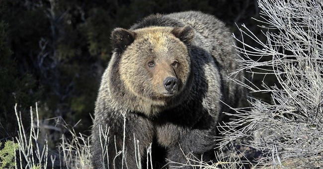 Former NHL Player Receives Death Threats After Legally Hunting A Grizzly Bear