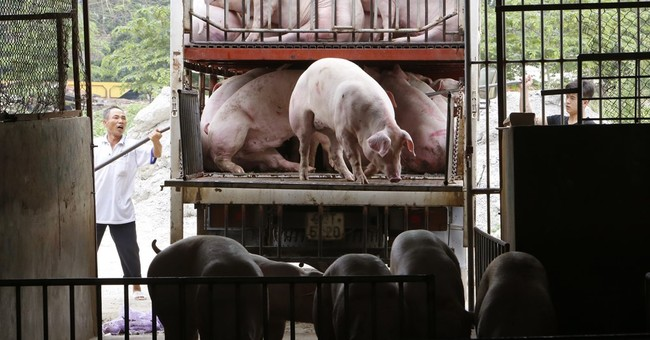 Is There A Spiritual Element To China's Pig Plague?