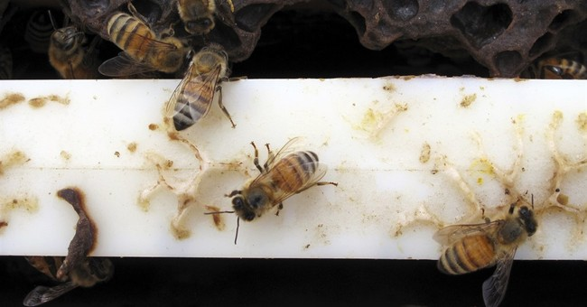 Advancing Scientific Integrity on Bees