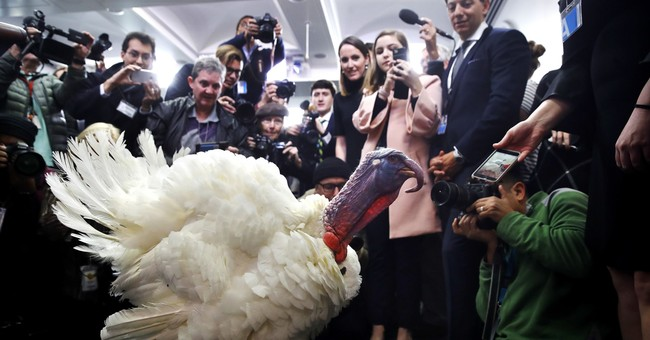 Sizing Up Turkeys from the American Farm