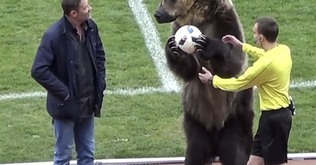 Animal rights groups slam bear use at Russian soccer match