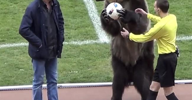Animal rights groups slam bear use at Russian soccer match
