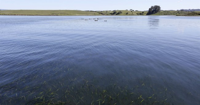 Sea otters rebound but struggle to regain historic range