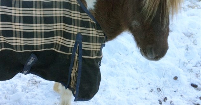 Fundraiser saves pony who lost penis to cancer, frostbite