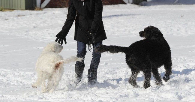 2 dogs save elderly Michigan woman from freezing outside