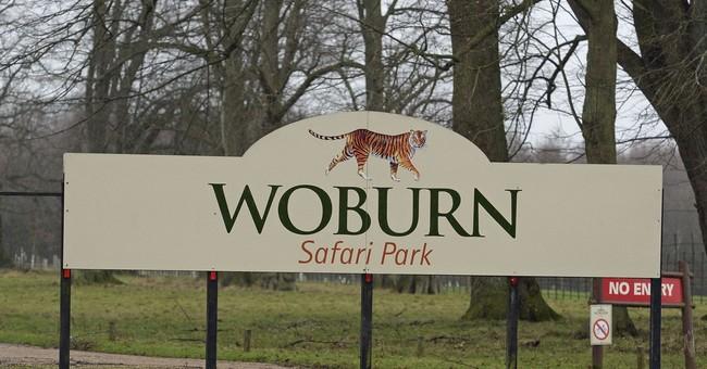 13 monkeys die in fire at UK safari park attraction