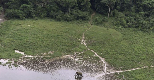 Gabon says major ivory trafficking ring dismantled, 10 held