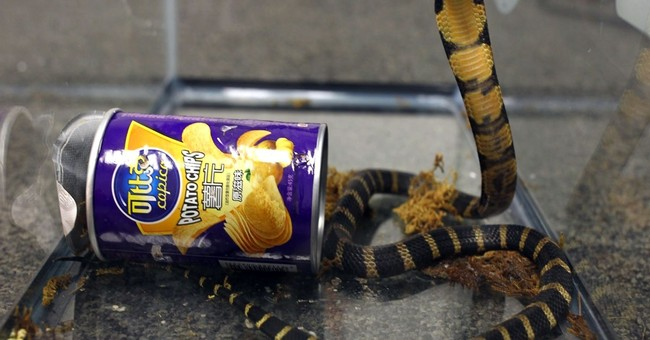 Man sentenced for smuggling king cobras in potato chip cans
