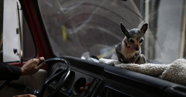 AP PHOTOS: Dog shelter struggling since Mexico City quake