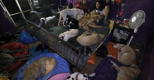 AP PHOTOS: Dog shelter struggling since Mexico City quake