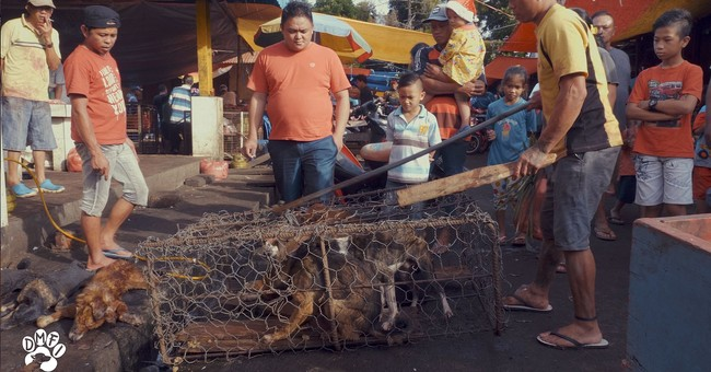 Groups call for shutdown of brutal Indonesia animal markets
