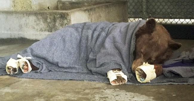 Correction: Burned Bears story